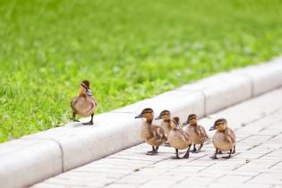 Key Opinion Leader – wer sind sie und warum sind sie wichtig?